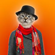 Cat wearing sweater, scarf and shirt, colored background - stock photo