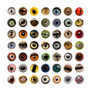 Composition of Animal eyes, isolated - stock photo