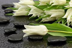 Tulip with stones to spa - stock photo