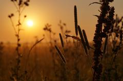 Stock Photo of sunrise in a meadow