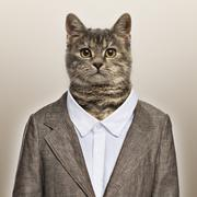 European Shorthair wearing a suit in front of a beige background Stock Photos