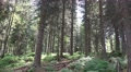 4k Sunny blueberry and pine tree forest mountain range Harz 4k or 4k+ Resolution