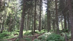 4k Sunny blueberry and pine tree forest mountain range Harz Stock Footage