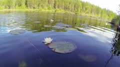 Dipping camera into a forest lake Stock Footage