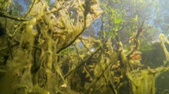 Underwater view of forest lake shore - stock footage