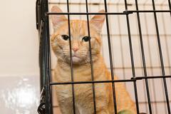 Orange striped cat and books Stock Photos