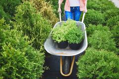 Carrying green seedlings Stock Photos