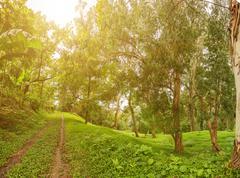 Rain-forest Kuvituskuvat