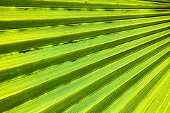 abstract green leaf - stock photo