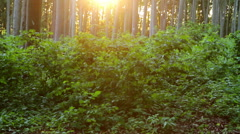 Beautiful beech forest with sunlight Stock Footage