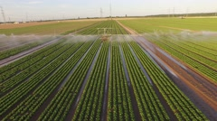Aerial Video: Watering a lettuce field in summer Stock Footage