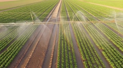 Irrigation plant watering a salad field - stock footage