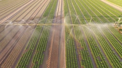 Aerial video - sprinkler system on a salad field Stock Footage