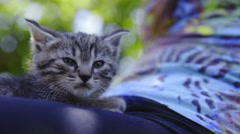 Cat on woman lap close up outside 4K Stock Footage