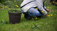 Outdoor flowers picking from lawn Stock Footage
