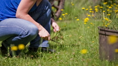 Woman cutting out unwanted weed from lawn Stock Footage