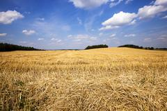 Stock Photo of agricultural field