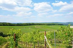 Vineyard hill - stock photo