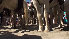 Horses for the traditional feast of the Gypsies in the Camargue Stock Footage