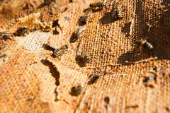 Busy bees, close up view of the working bees. Stock Photos