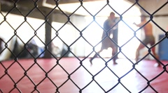 Cage fight through fence.mp4 Stock Footage