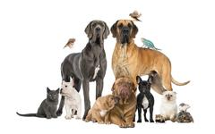 Group of pets - Dog, cat, bird, reptile, rabbit, isolated on white Stock Photos