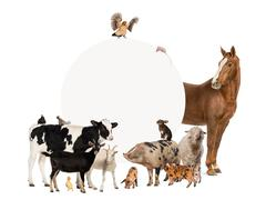 Group of farm animals surrounding a blank sign - stock photo