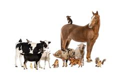 Group of farm animals - stock photo