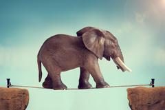 Elephant on a tightrope Stock Photos