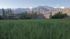 Landscape with barley field and tower,Alchi,Ladakh,India Stock Footage