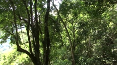Cable car in costa rica forest Stock Footage