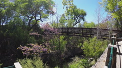 Idyllic Bridge Over Wooded Creek- Silver City New Mexico Stock Footage