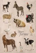 Educational poster with farm animal in French - stock photo