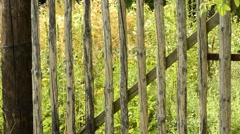 Old wooden gate of a garden Stock Footage