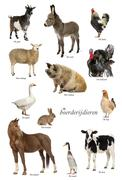 Educational poster with farm animal in Dutch - stock photo
