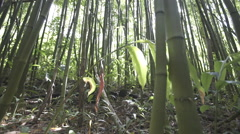 Bamboo Forrest Stock Footage