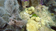 Stock Video Footage of Snorkeling a living Coral Barrier Reef in the Florida Keys