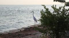 White Heroin Florida Keys Coast Stock Footage
