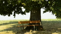 Park bench under old lime tree - stock footage