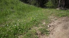 Movement in slow motion on meadow butterfly flies Stock Footage