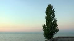 Poplar against the backdrop of pre-dawn sky and sea Stock Footage