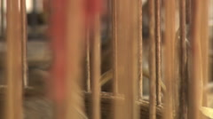 Small birds in wooden cages Stock Footage