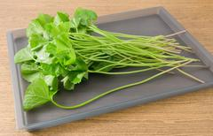 Vegetable and Herb, Fresh Medicinal Centella Asiatica, Asiatic Pennywort, Tha - stock photo