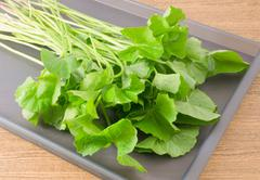 Vegetable and Herb, Green Medicinal Centella Asiatica, Asiatic Pennywort, Tha - stock photo
