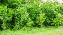 Pile Of Garbage On Grass In Green Forest Stock Footage