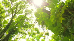 Jungle Canopy Lens Flares Stock Footage