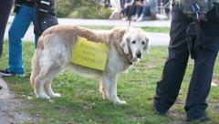 May Day - Social Demonstration - 04 - Protester's Dog Stock Footage