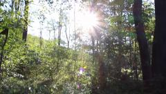 Stock Video Footage of Sun Golden Hour in the Woods V1