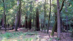 Big Basin Redwoods State Park Stock Footage