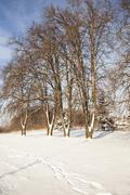 park in the winter - stock photo